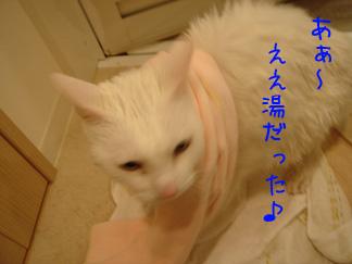 2007032604